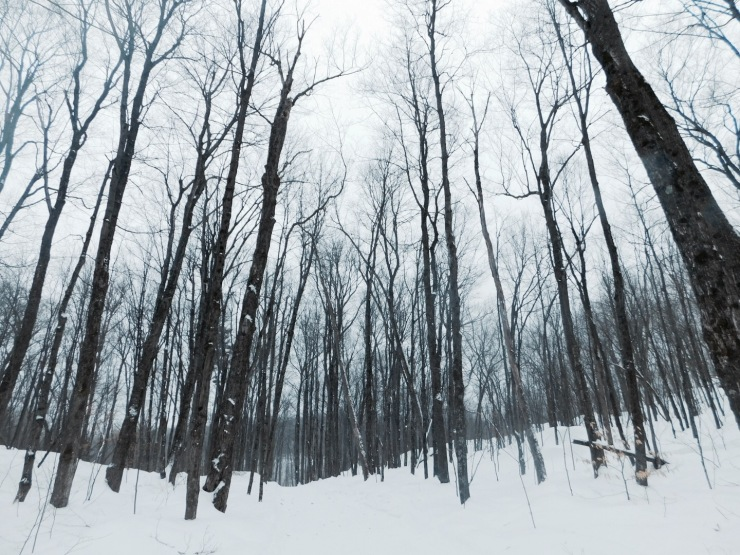 Winter (taken in Gatineau Park 2016)